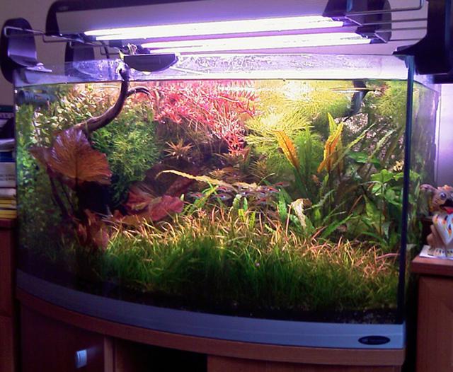 Освещение аквариума: типы ламп и их приемущества