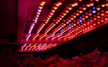 Выбор ламп для теплиц - особенности и расчет