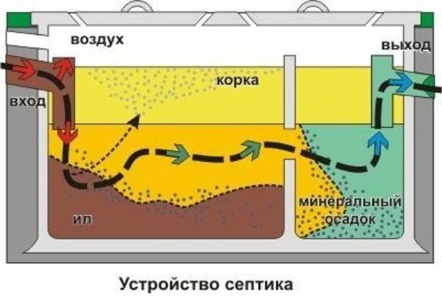 Бактерии для септиков: обзор, виды, как работают, анаэробные и аэробные типы